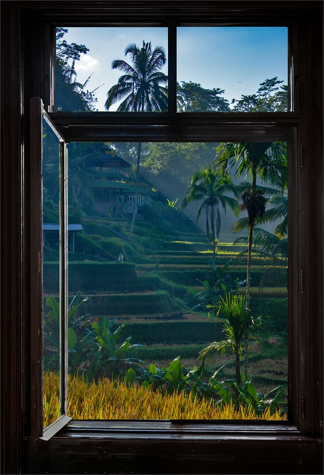 * View of the rice terraces *