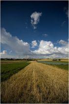 View on fields near Miechów, Malopolska, Poland