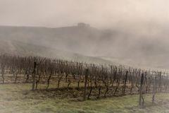 vigne nella nebbia