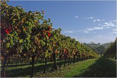 Vignoble gersois à l'automne