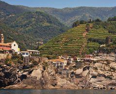 vignoble, source de renouveau aux 5 terres
