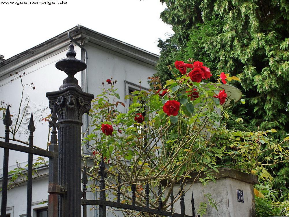 Villa Dornröschen