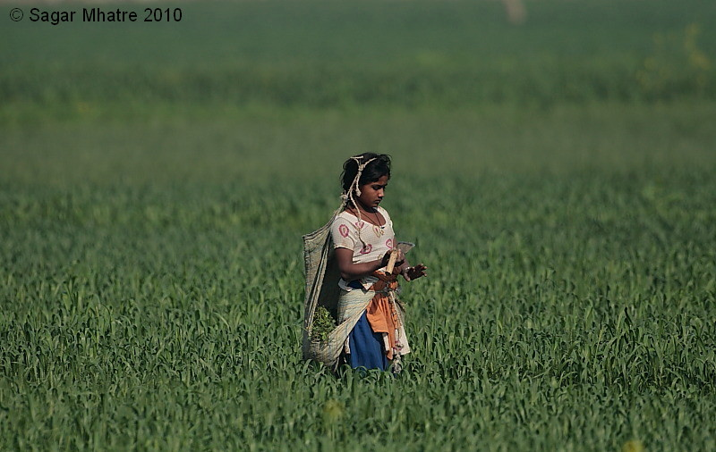 Village Girl in the Wheat Fields