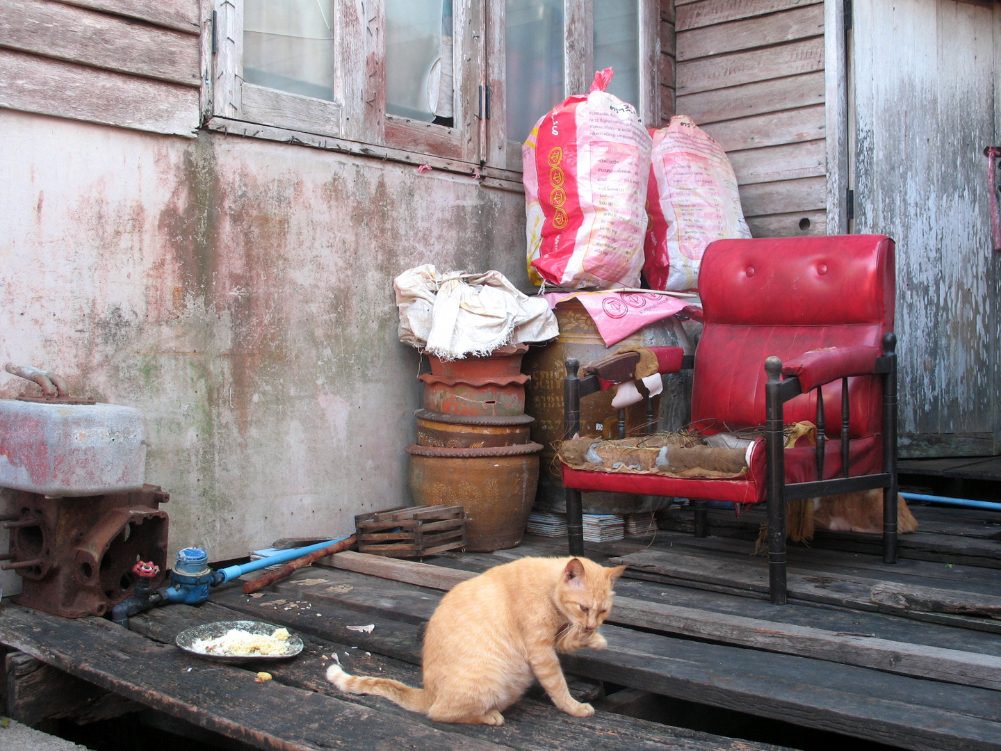 Village-Nature morte with a cat
