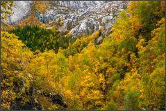 Villmark Rago nasjonalpark - Wildnis Rago Nationalpark