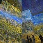 Vincent   --  Sinneswandel  ...  __©D8793_OC