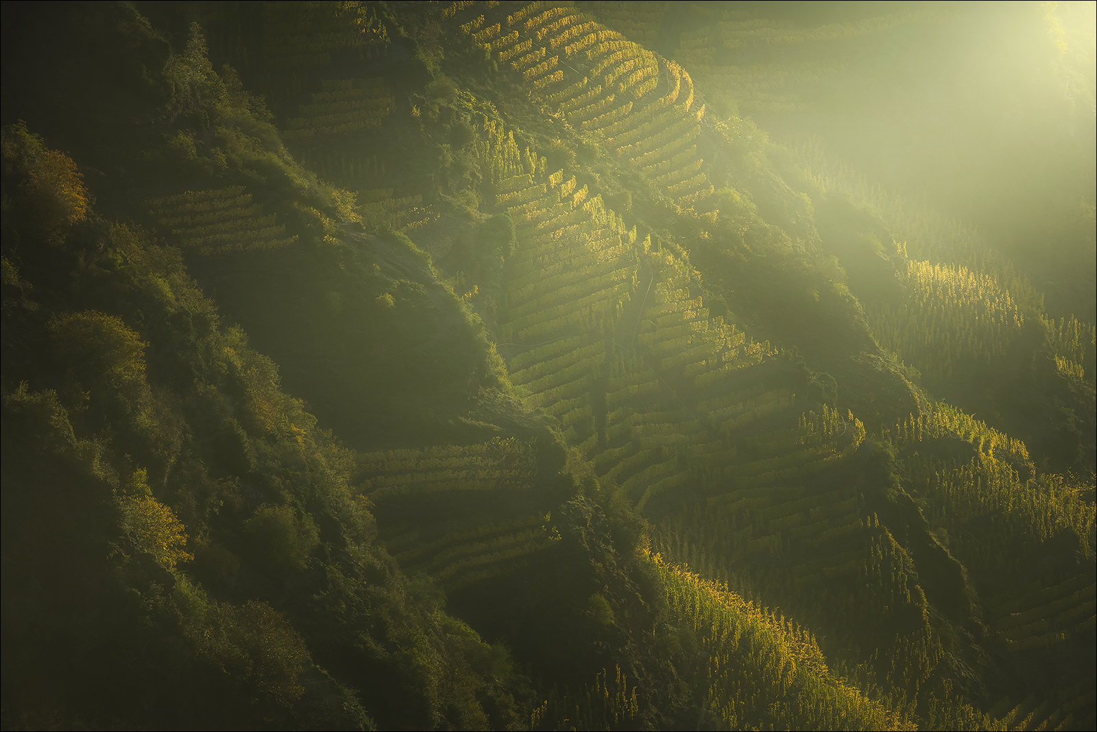 [ ... vineyard ]