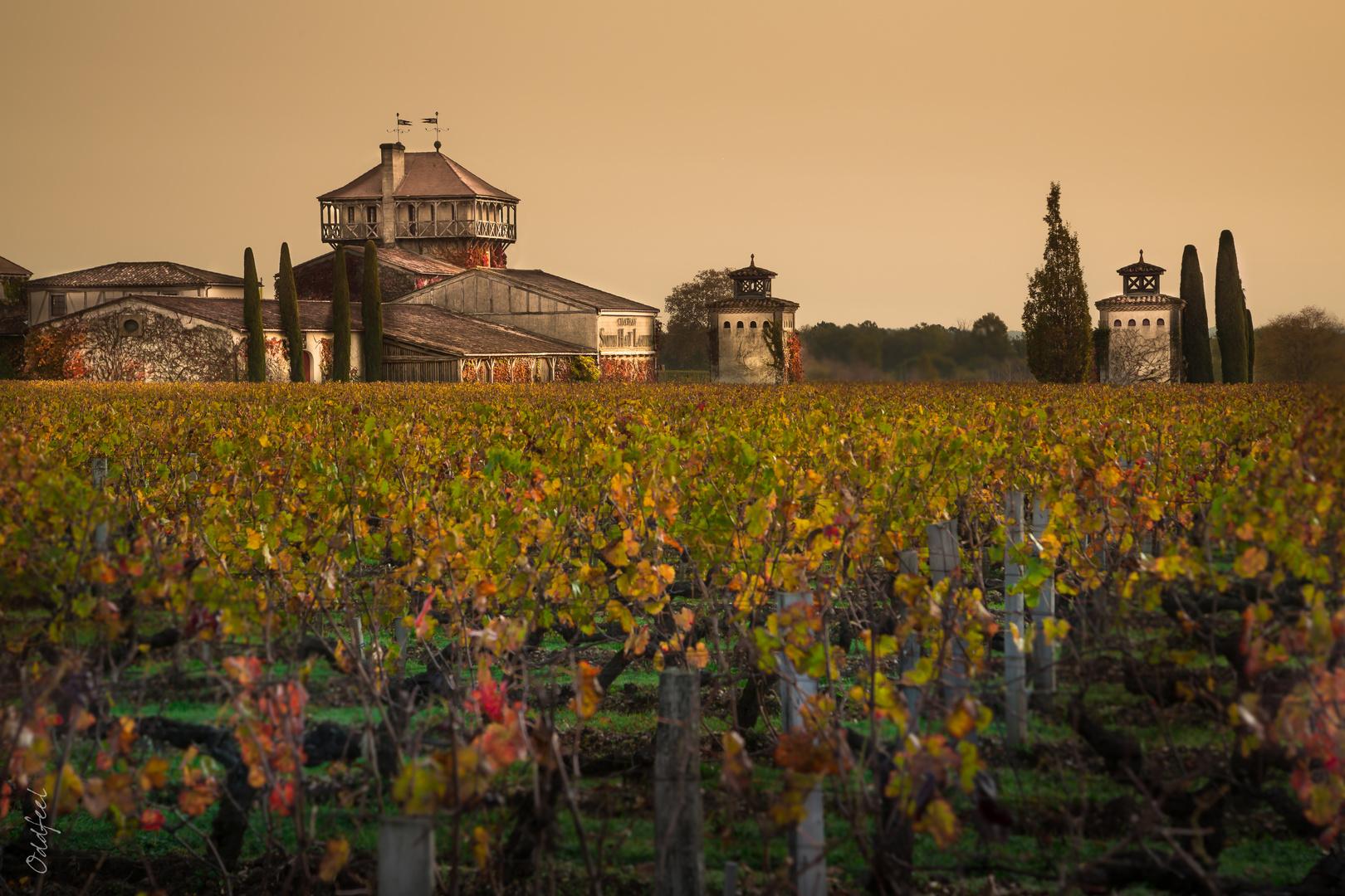 Vineyard & Castel