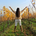 Vineyard centralized