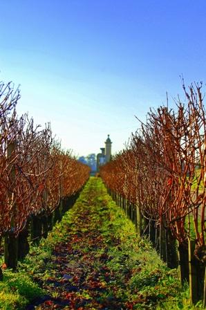 Vineyards at Chateau Pape Clemont, Bordeaux France