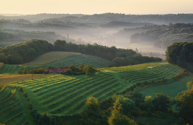 vineyards of Slovenia 1