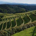 vineyards of Slovenia 2