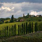 vineyards of Slovenia 3