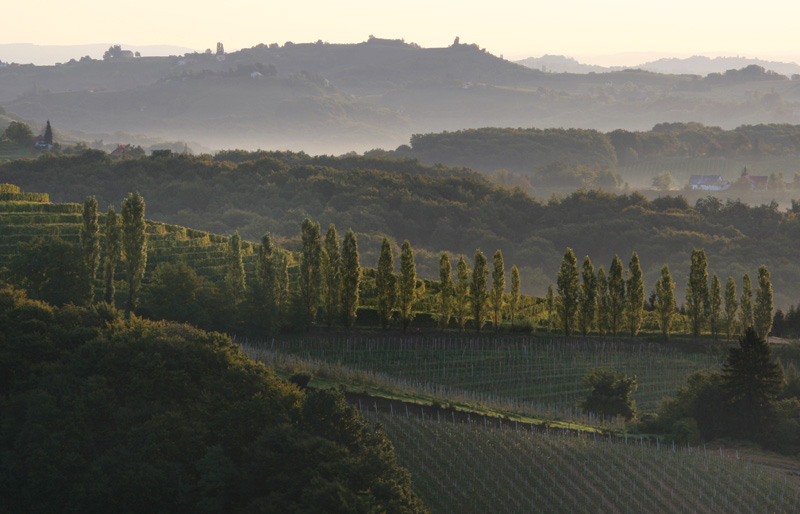 vineyards of Slovenia 5