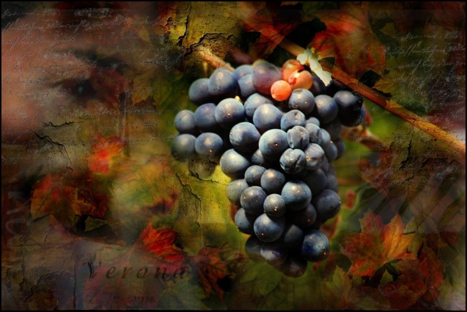 ~~vino tinto~~~