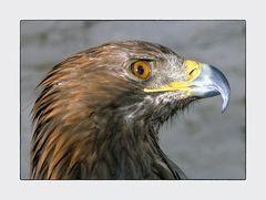 Vintage Adler - Analog fotografiert