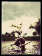 Vintage Snail