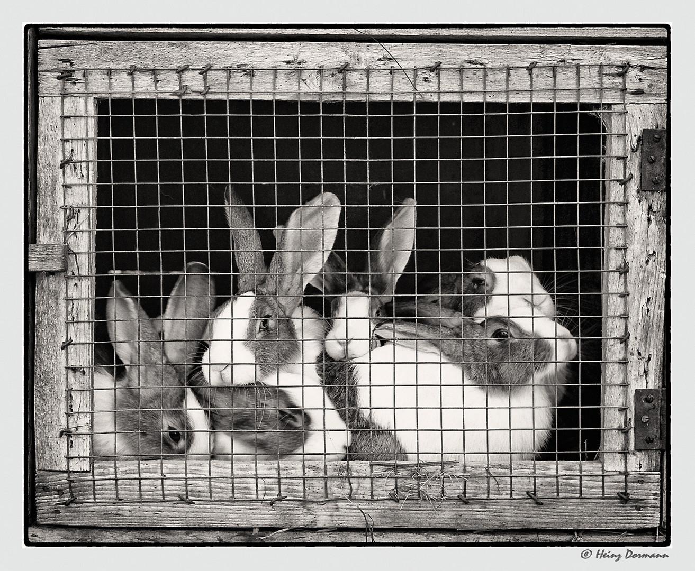 """Vintage_""""Arme"""" Osterhaserln aber sie dürfen frei leben..."""