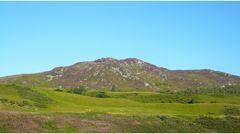 Violet Highlands
