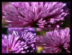 violett...