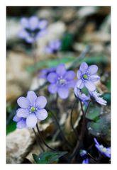 *violett