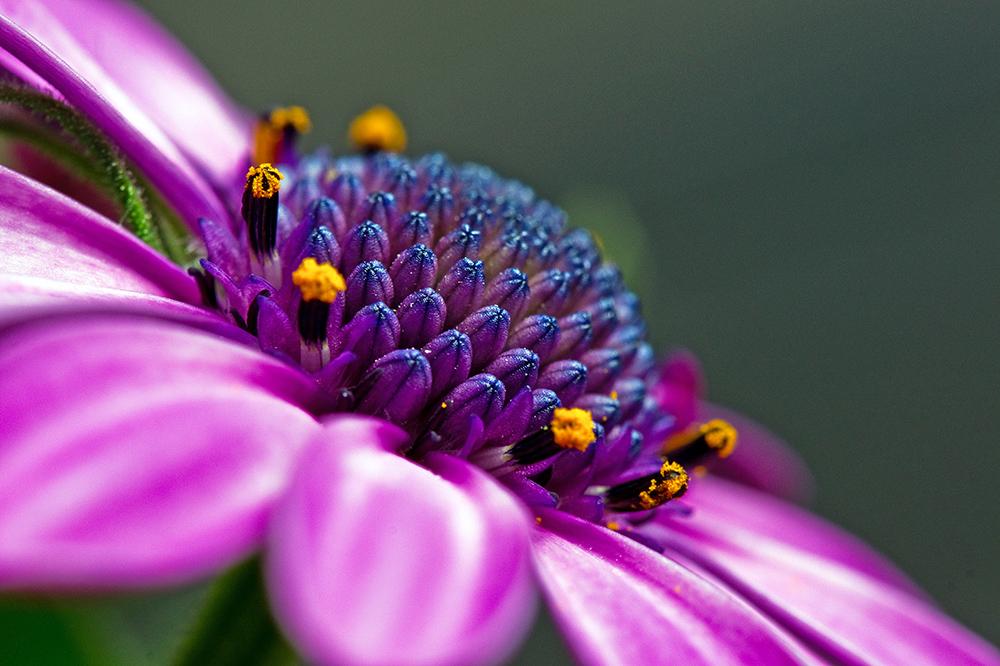 Violetta.......