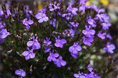 violettblue