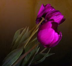 Violette-----
