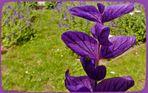 """Violette """"Blüten"""" im Schmiedegärtchen"""