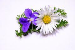 violette et pâquerette