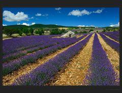 Violette Linien