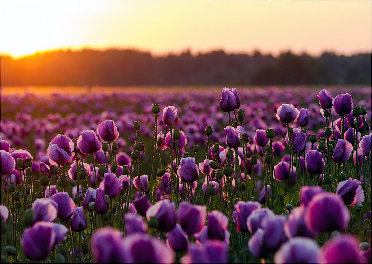 Violette Magic