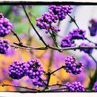 Violetter Herbst