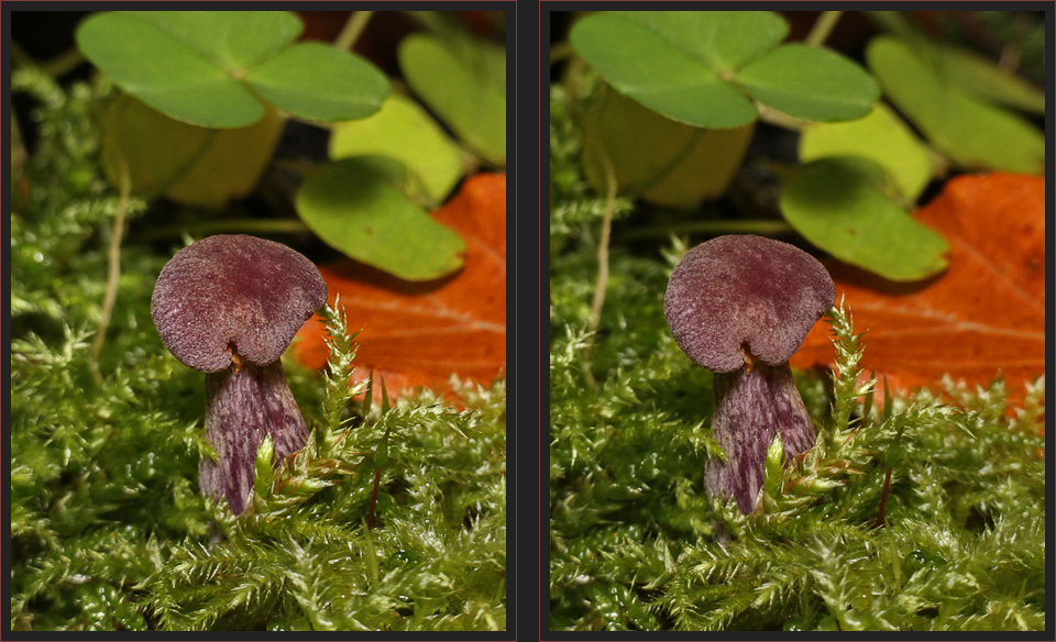 violetter Pilz [3D]