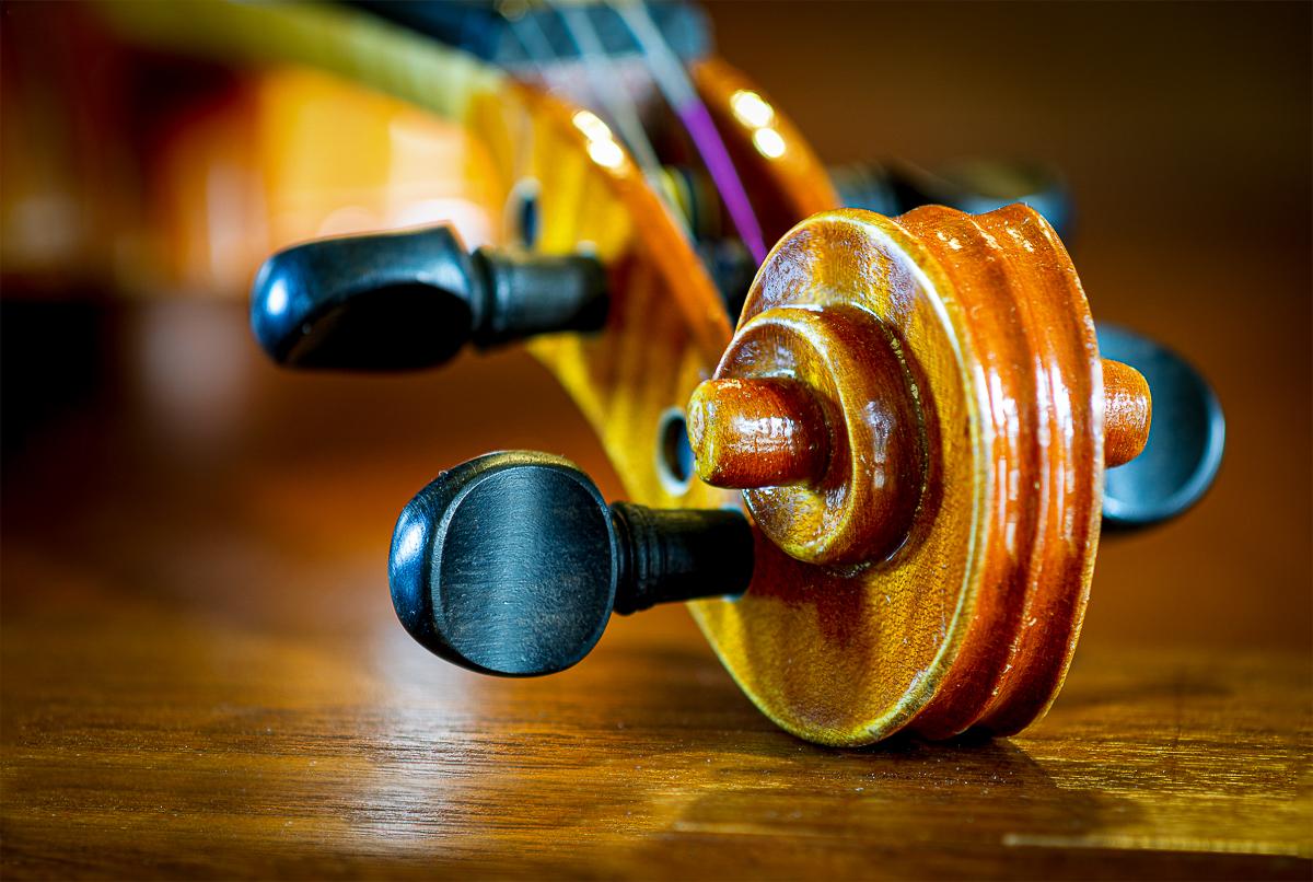 Violinenschnecke