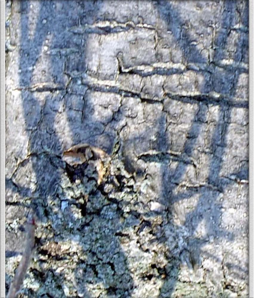 Visages de l'arbre -'7'