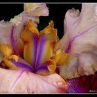 vision 104  la magie des fleurs