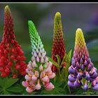 vision 106 La magie des fleurs