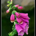 vision 107  La magie des fleurs