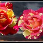 vision 108   La magie des fleurs