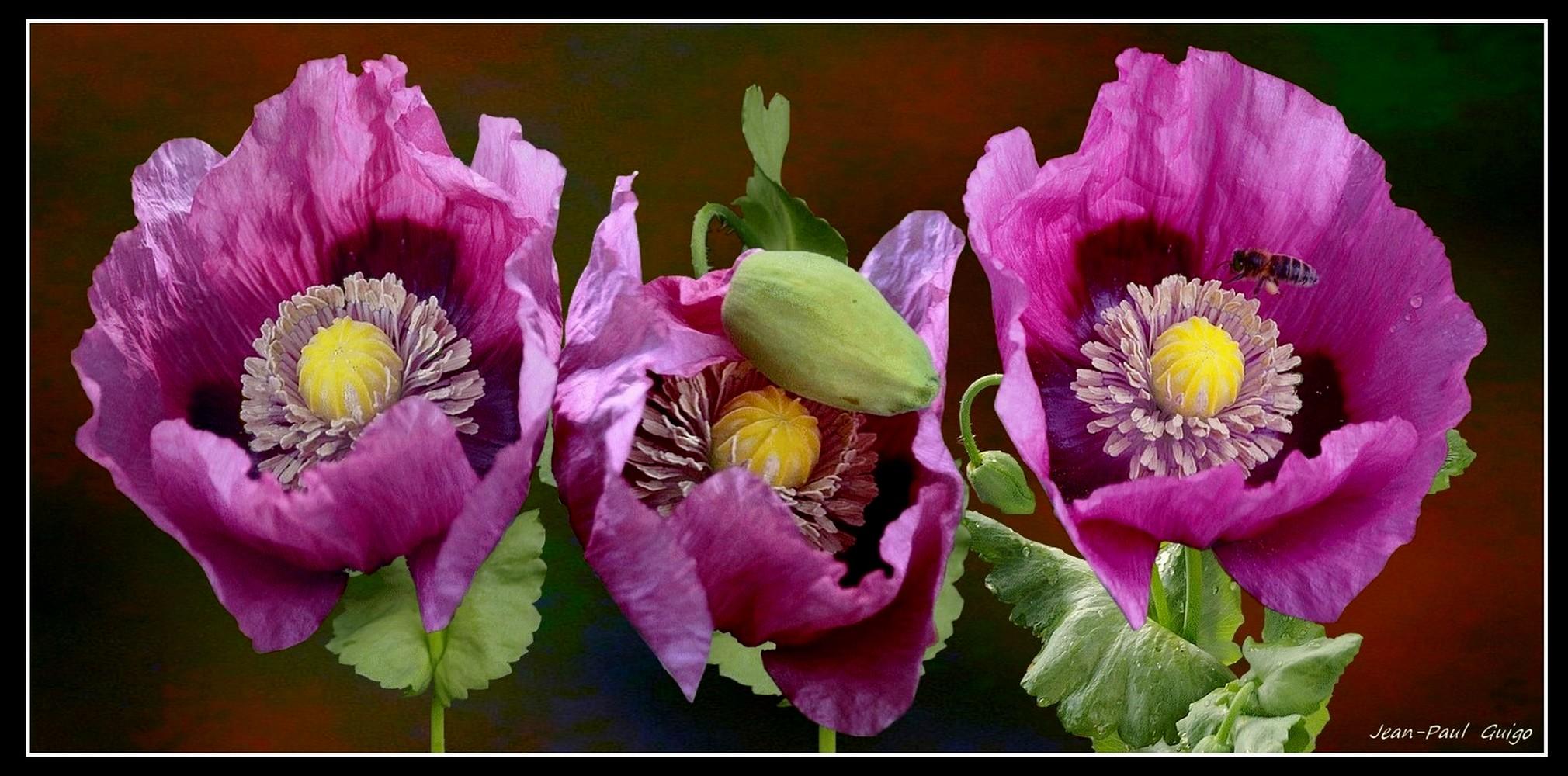vision 110 La magie des fleurs