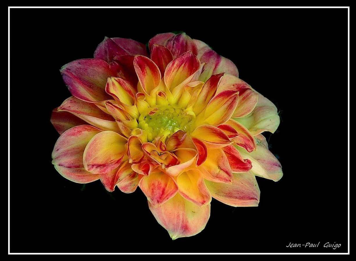 vision 113  La magie des fleurs