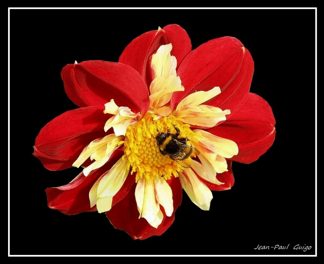 vision 118  La magie des fleurs