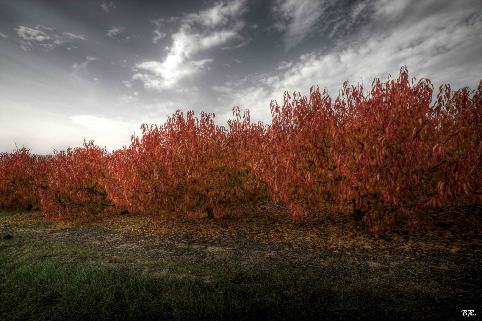 vision d'automne