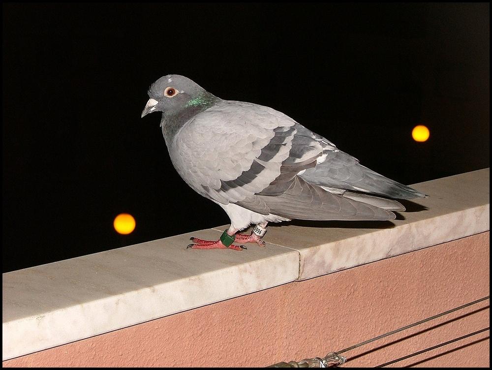 ...visita notturna al mio balcone...