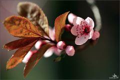 Vive le printemps I