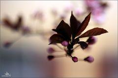 Macro/Fleurs