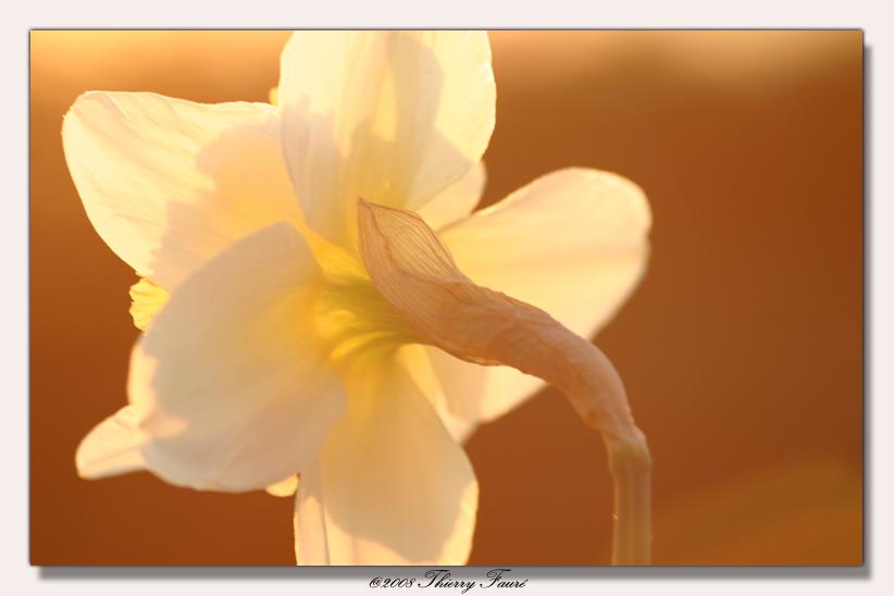 Vivement le printemps