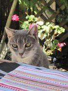 Viv's cat