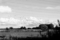 Vögel 2.0